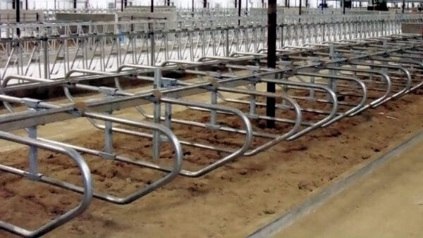 GEA Traditional Freestall Systems barn view.