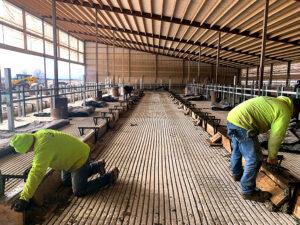 Schmidt Building and Equipment concrete work in heifer barn.