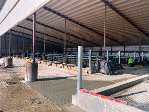 Siebrand Heifer concrete leveling.