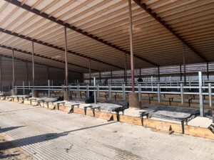 Siebrand Heifer freestall brackets installed.