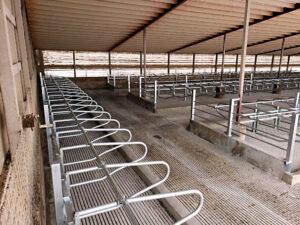 Siebrand Heifer barn freestalls.