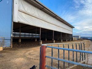 Siebrand Heifer barn with livestock curtains installed.