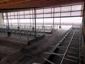 Siebrand Heifer barn remodel after finished (freestall view).
