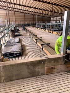 Siebrand Heifer barn stall concrete work.